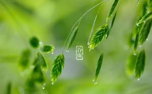 Grain Rain Day