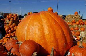 huge_pumpkin